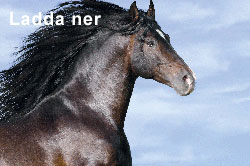 ladda_ner